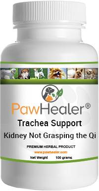 Trachea Support for Kidney Not Grasping the Qi