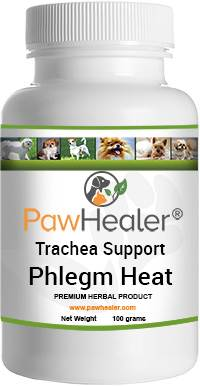 Trachea Support: Phlegm Heat Pattern
