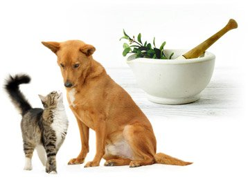 Herbs for Dogs  Effective All Natural Canine Herbal Remedies