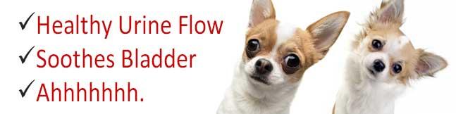 Bladder Support for Damp Heat